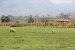 Peguche Field Before Preparation