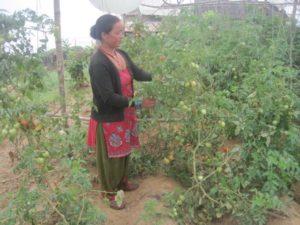 A Gardener in Nepal