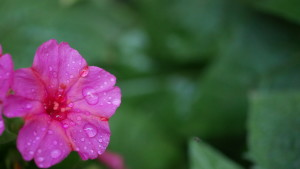 500px Photo ID: 127293591 - Afternoon showers...