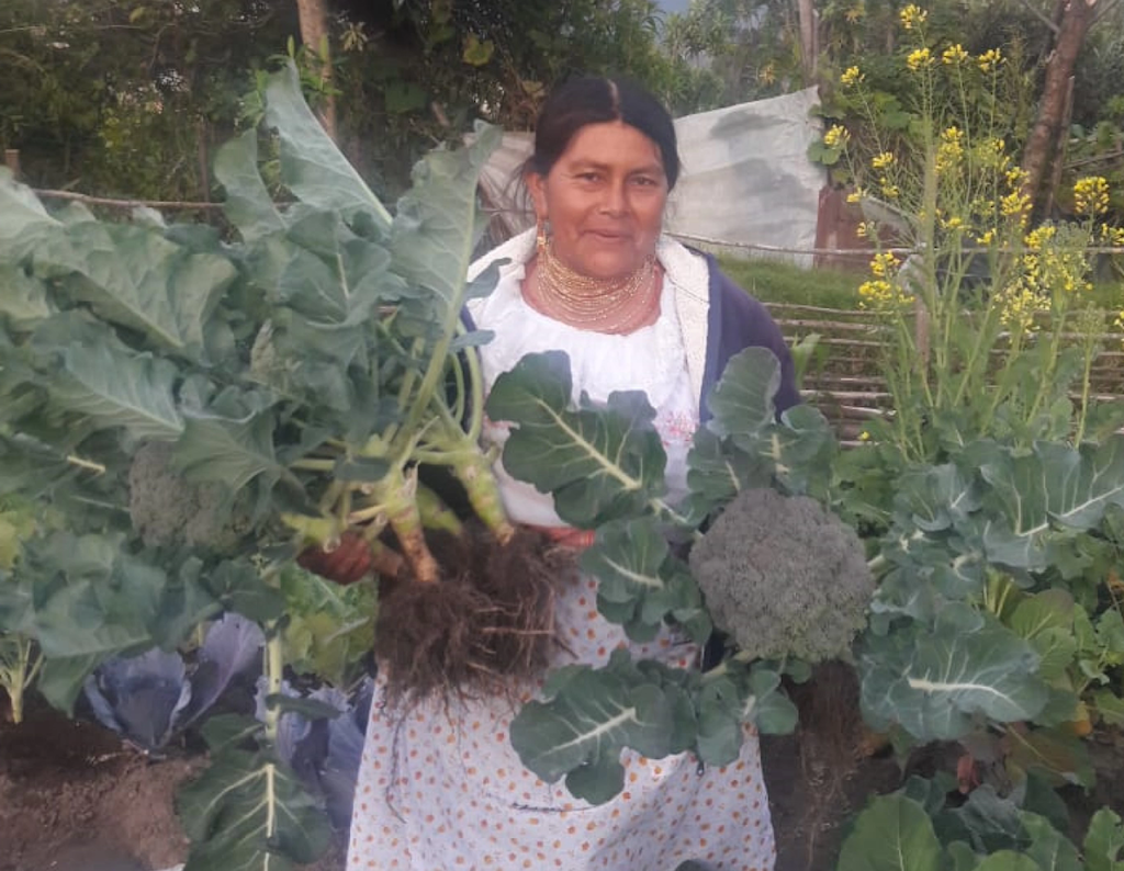A beneficiary of Seeds of Hope harvests broccoli and other vegetables
