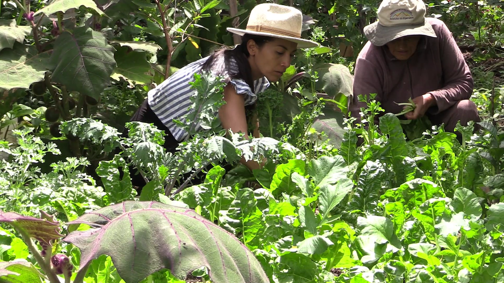 A beneficiary of Seeds of Hope harvests vegetables